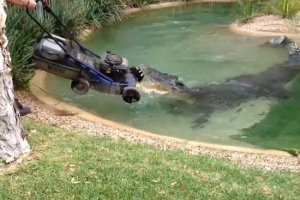 crocodile lawnmower